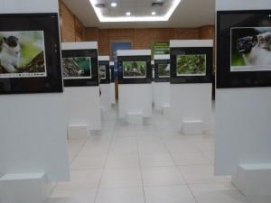 Exposição SOS Sauim no hall do Teatro Direcional