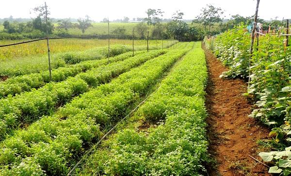 Novo Airão recebe Semana de Agricultura Familiar e Agroecologia