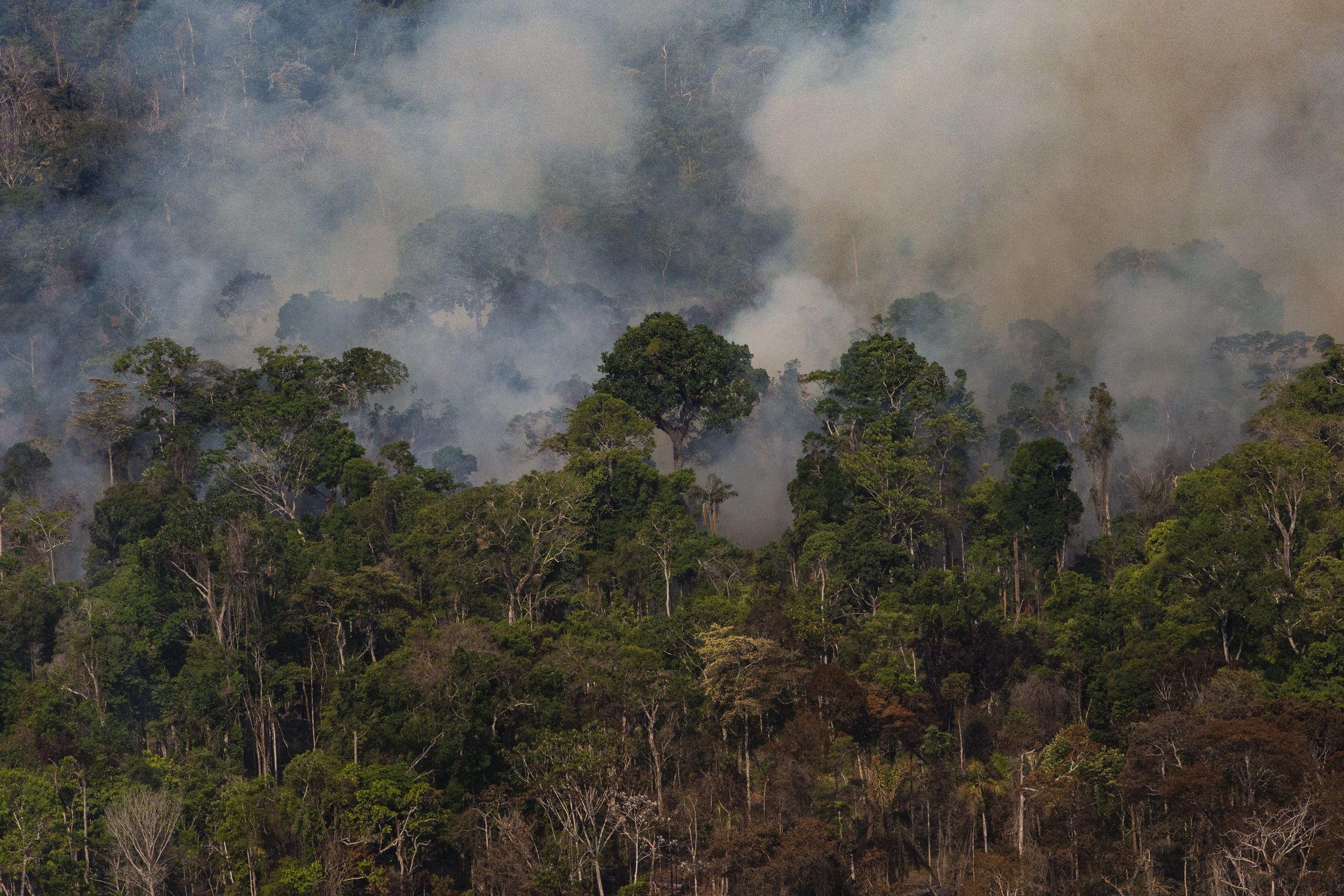 FVA lança boletim sobre prevenção e combate a incêndios florestais